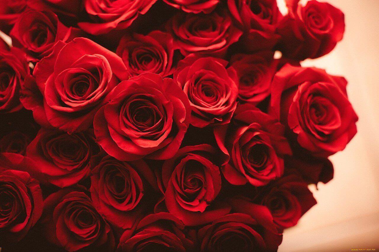 красивый букет красной розы